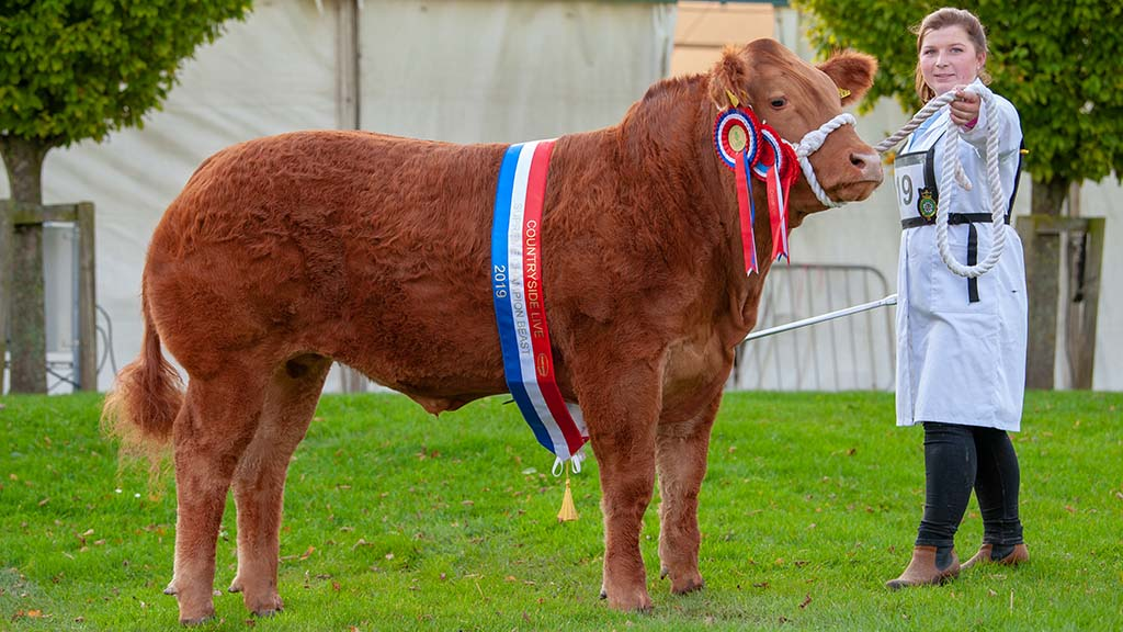 Steer and overall champion Haribo