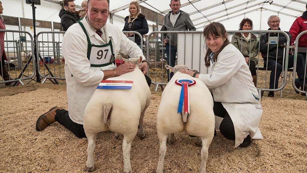 Supreme Champion Pair of Butchers Lambs with Ian and Mary Lancaster