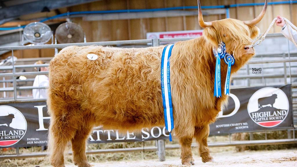 8,000gns Anna of Eilean Mor from Karen and Michael McGregor, Argyll.