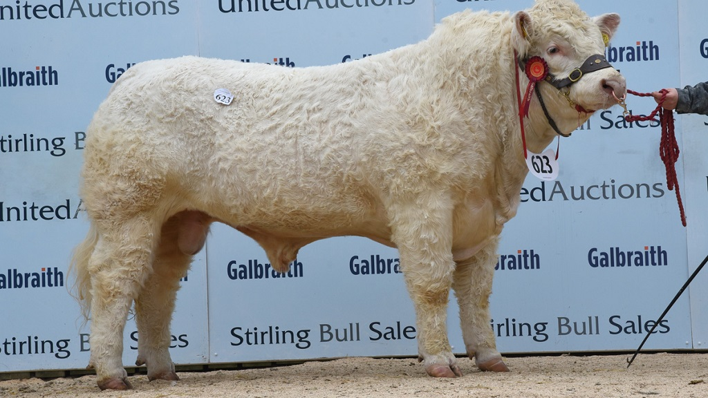 Charolais head Stirling trade at 23,000gns