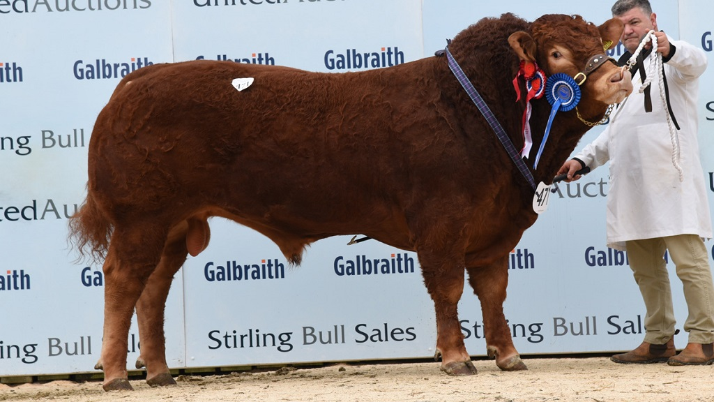 Stirling Limousins sell to 10,000gns