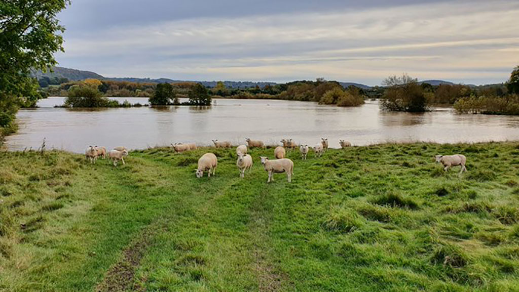 Herefordshire farmer says weekend rainfall created third biggest farm flood since 1968