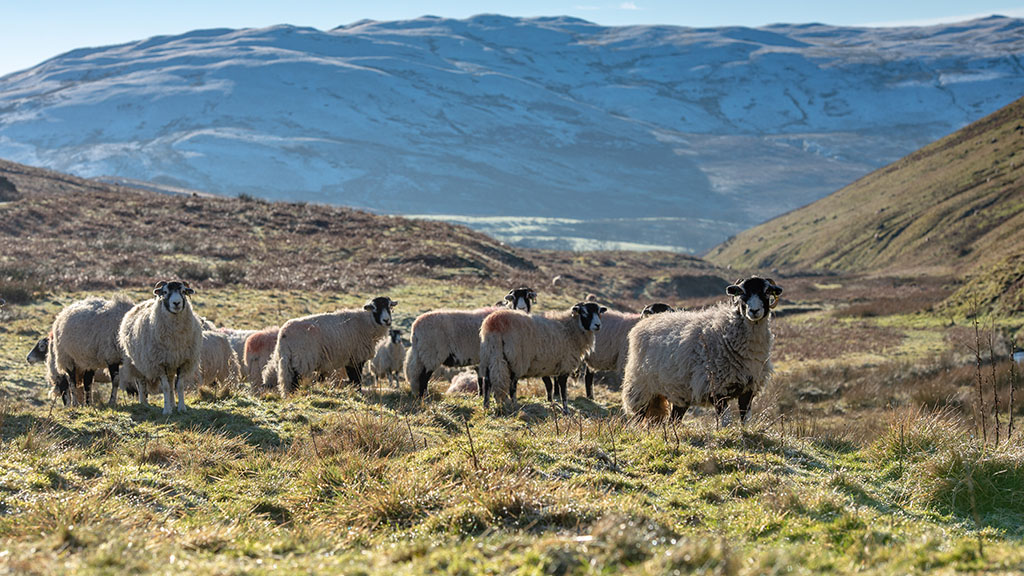 Business update: Profitability key amid 'blurry' 2020 outlook for British farming