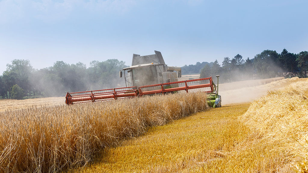 Cereals market 'cautiously bullish' amid weather problems in key regions