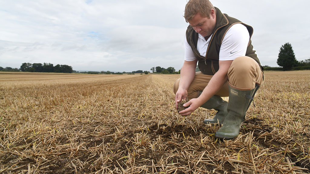 Talking Agronomy with Ben Boothman: Very few of my OSR crops this year have yet to receive an insecticide