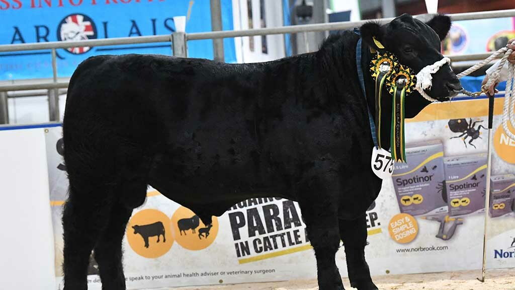 Aberdeen-Angus Winter National Show