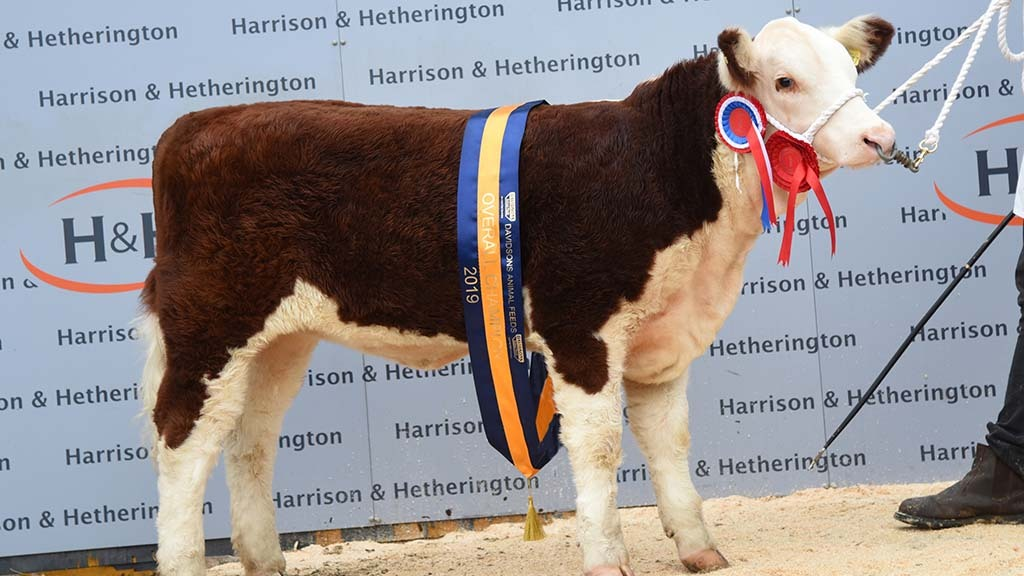 Hereford National Calf Show
