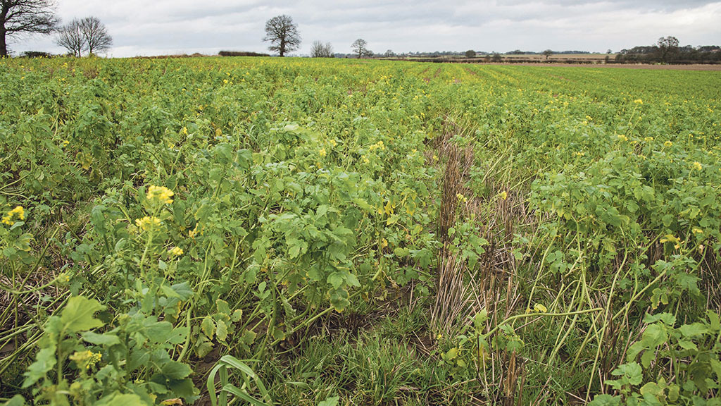 Cover crop strategies 'are essential' as negative impact on gross margins is identified
