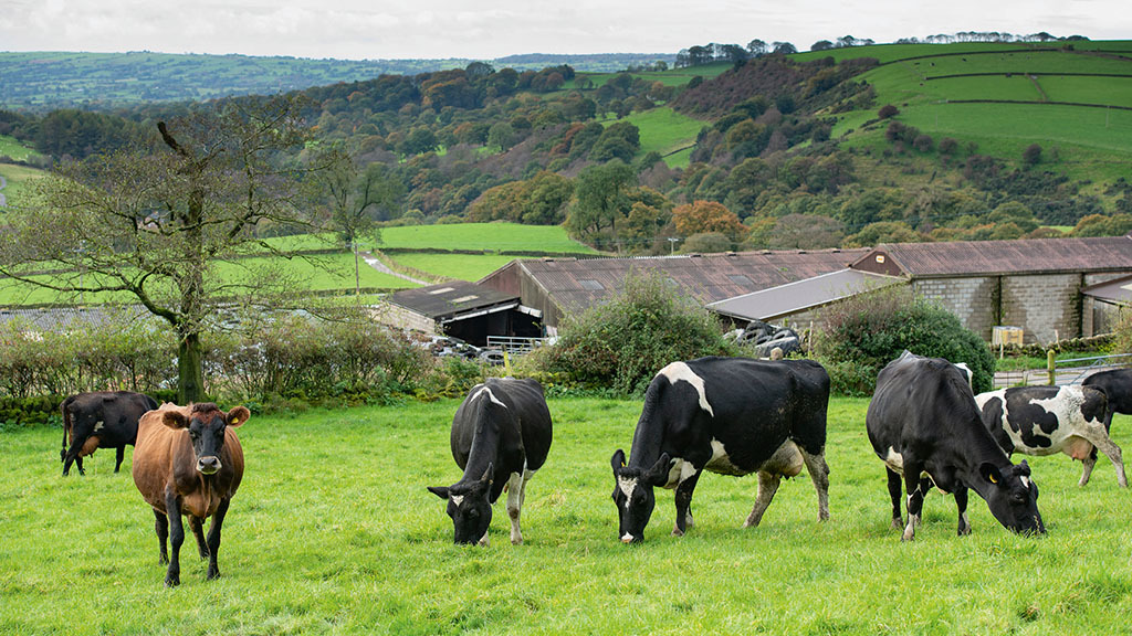 60 per cent of Scottish dairy farmers not confident about direction of industry