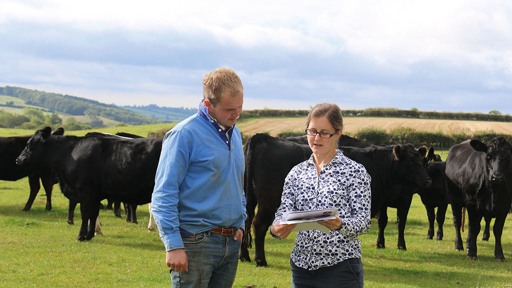 Beef special: Five-step checklist helping to improve herd's health