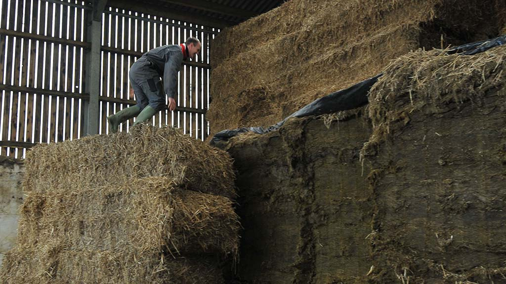 'Catastrophic falls are still the one of the most common causes of fatal injuries on farm'