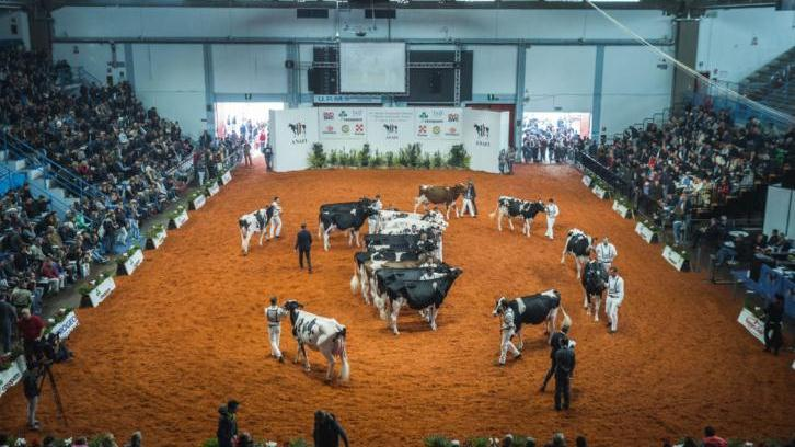 International success for daughters by Stantons chief at Cremona, Italy.