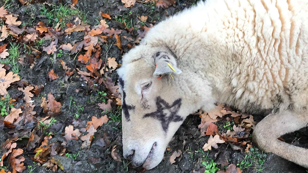 Police appeal for witnesses after livestock marked with 'occult symbols'