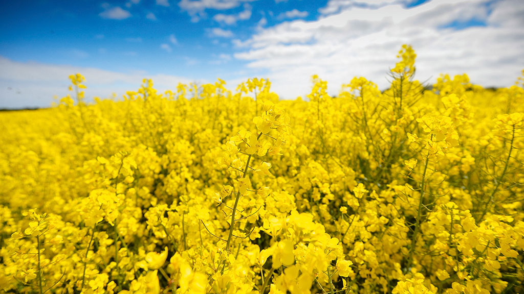 2020/21 Recommended List: OSR options bring a big step forward in yield for all regions