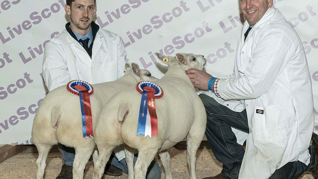 Overall sheep champions, a pair of Beltex lambs from Andrew Baillie, Lanark.