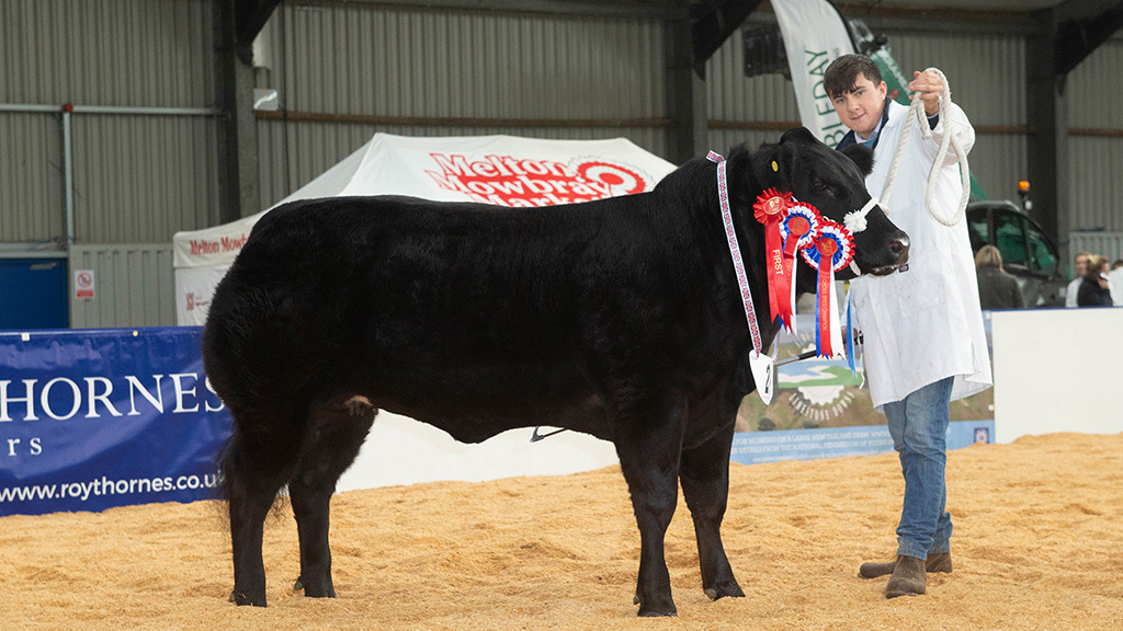 Reserve beef and cross-bred champion, Tinkerbell from Kevin Ludgate and family, Leighton Buzzard