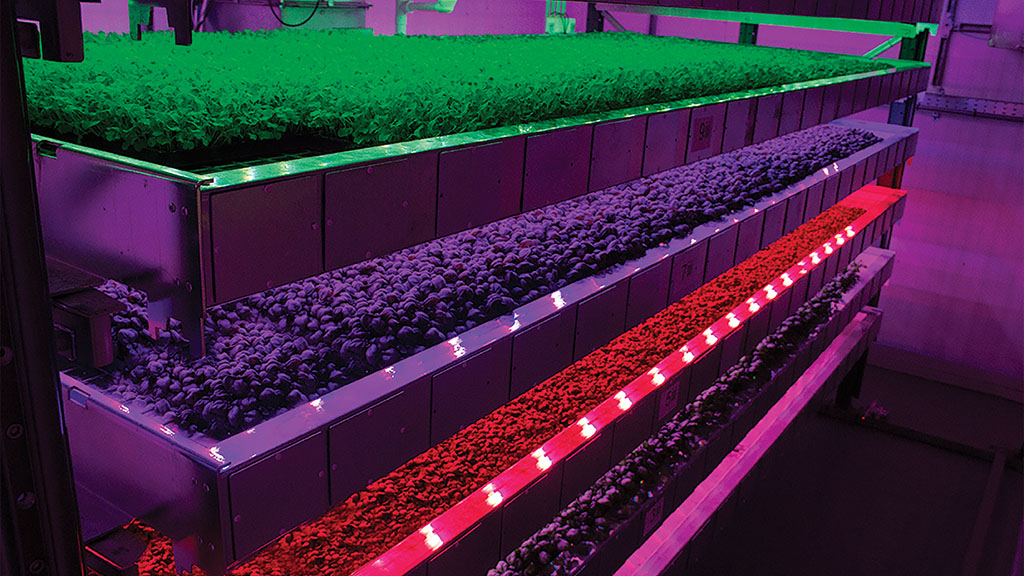 Vertical farming: 'We pick products which taste really good and get good yields'