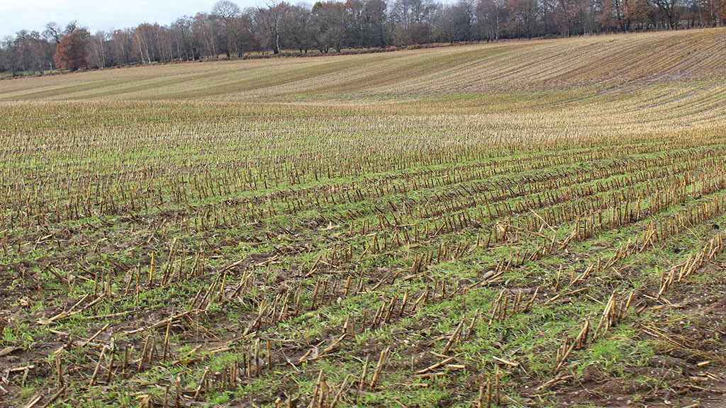 Reducing runoff with undersown maize