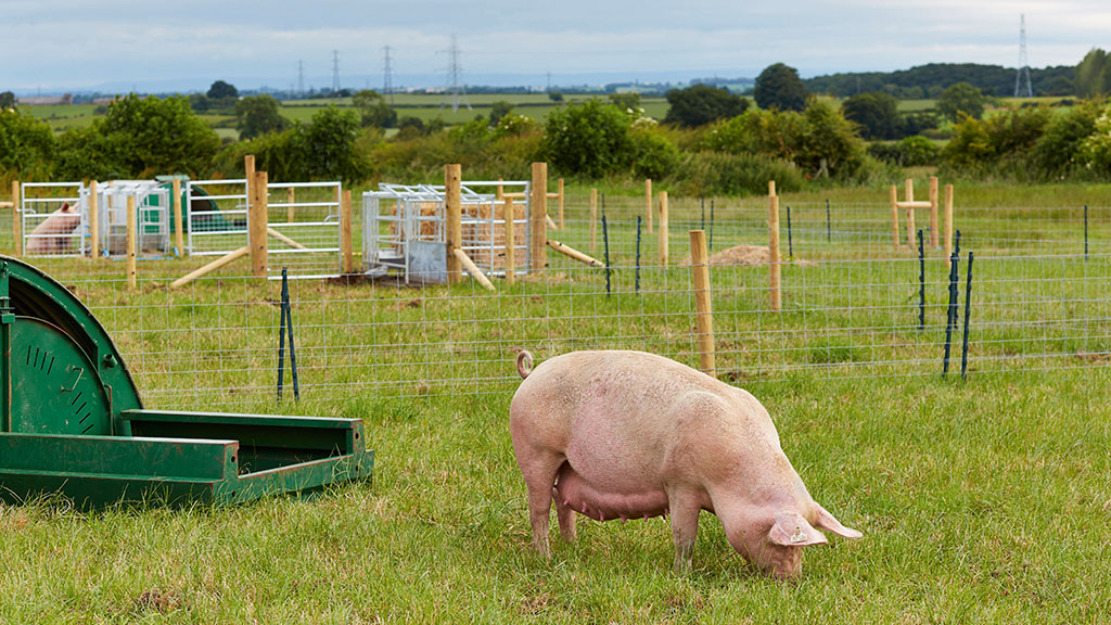 State-of-the-art pig research facilities open in Yorkshire with £11m boost