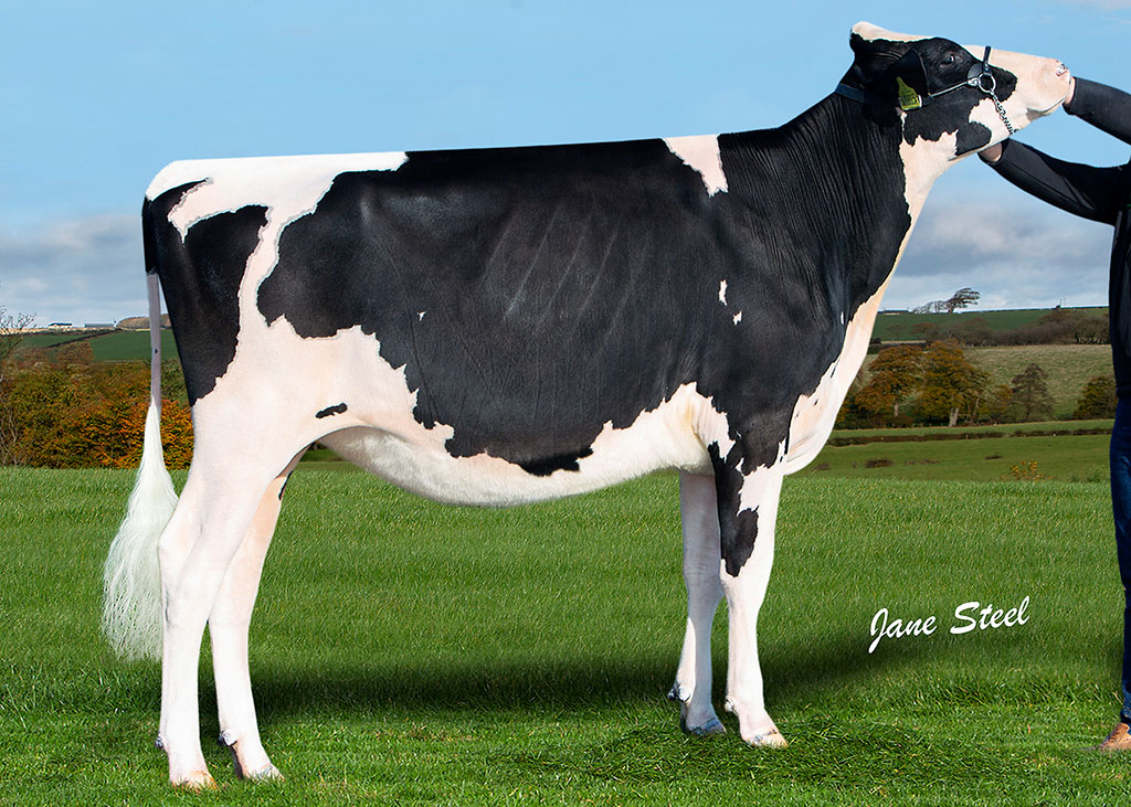 Nethervalley Kinpin Sara from the Scot family, Ayrshire sold for 10,000gns
