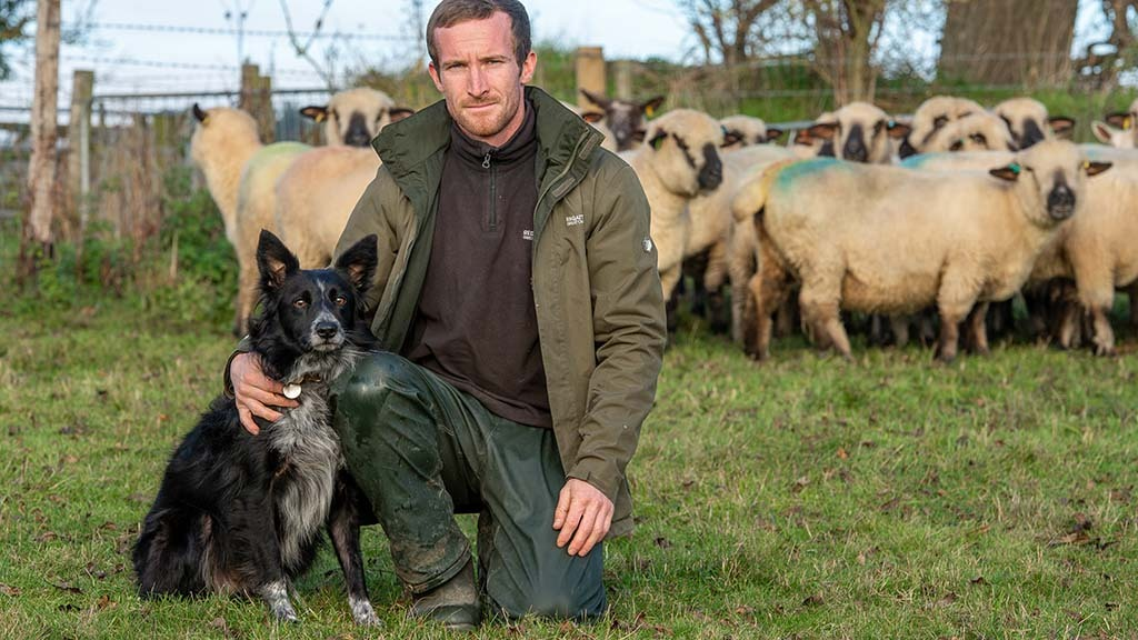 Sheep special: Cross-breeding meets demands of farming system and consumer