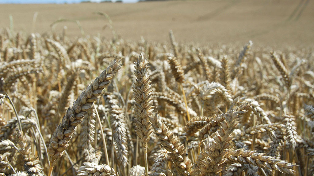 What do the election results mean for arable farmers?