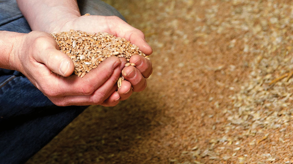 Getting a handle on phosphate levels with grain P analysis