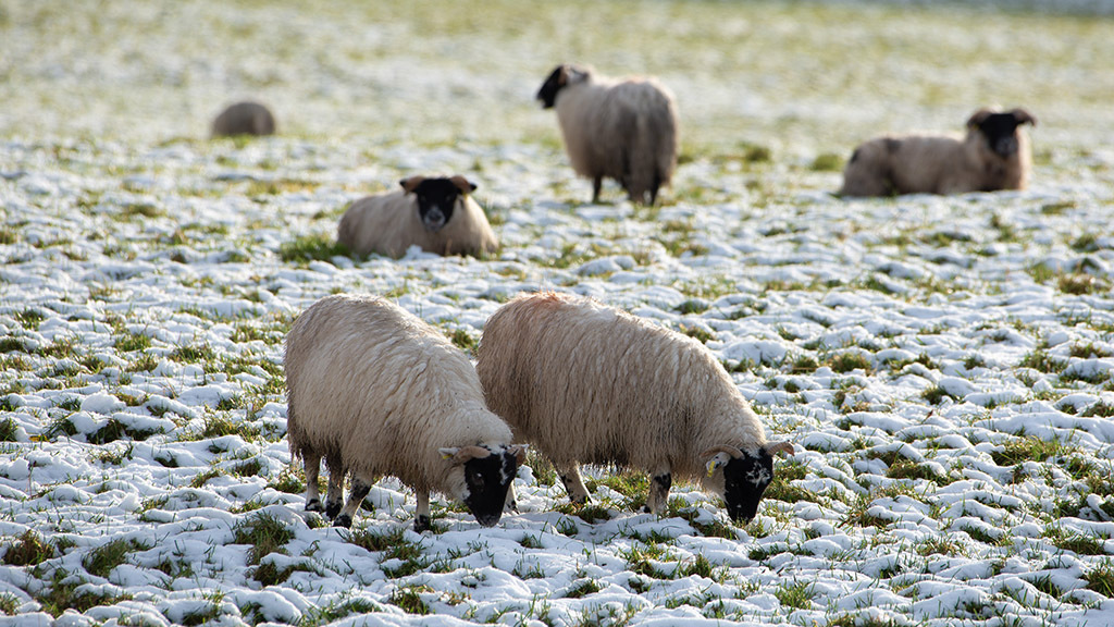 Get ready for the winter freeze: How farmers can be properly prepared