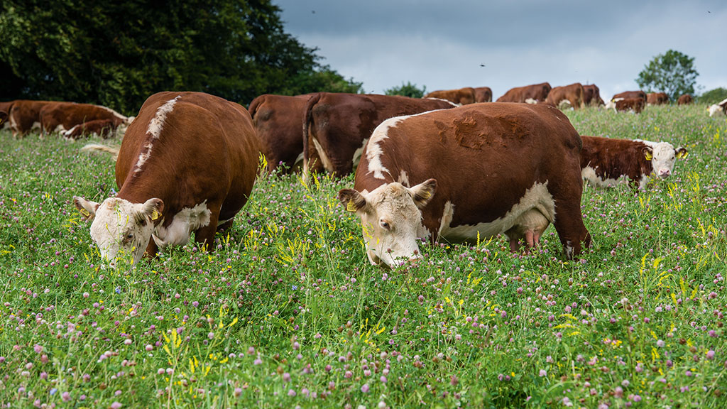 Nature Friendly Farming Network urges shoppers to keep buying British after pandemic