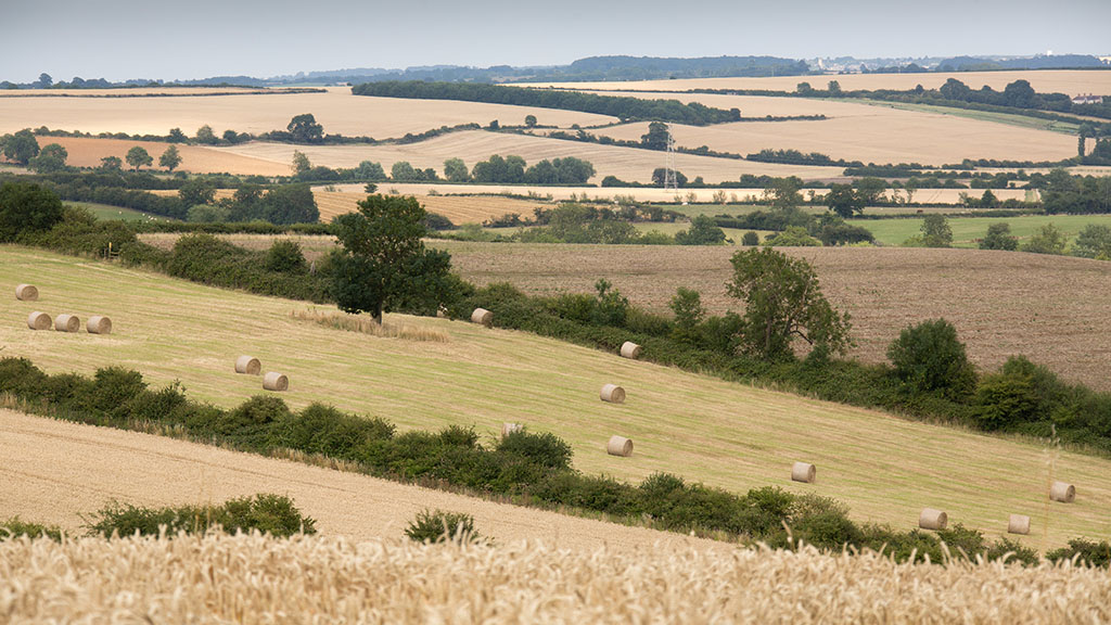 'Brelief' may give land values a temporary boost, land agents say