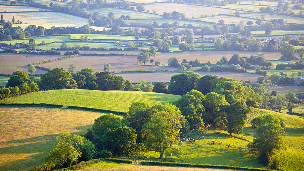Government unveils plans for 'three tier' post-Brexit farming scheme