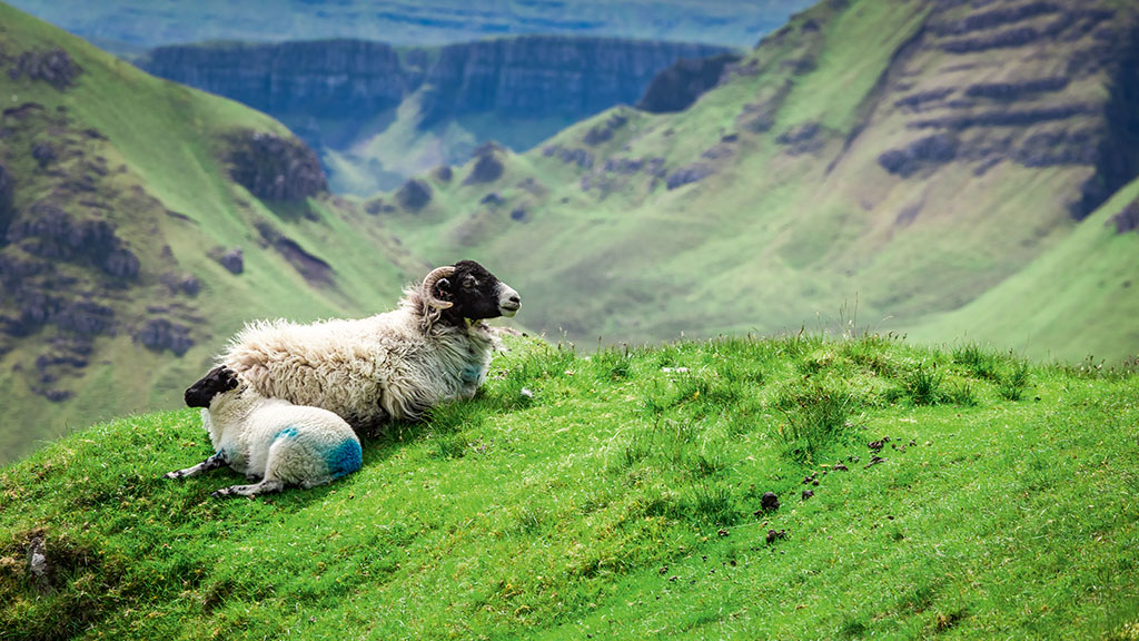High lambing rates boost Scottish lamb crop