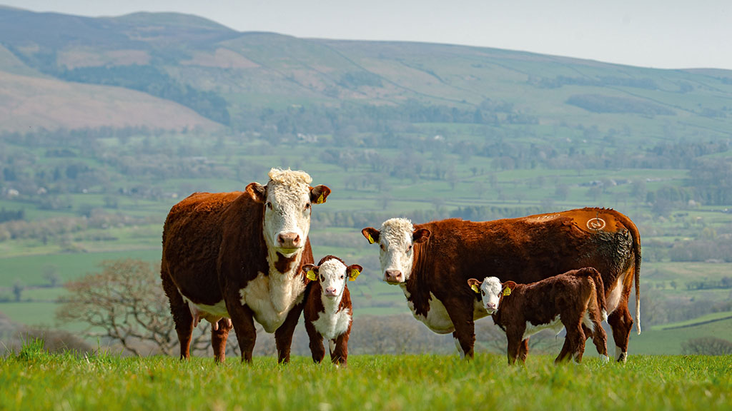 Chancellor's £3bn commitment to farming - full details announced