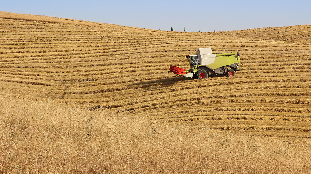 Wheat yields disappointing but quality fair