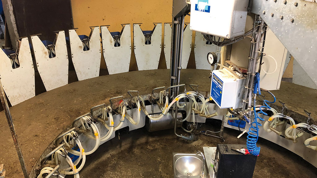 Ewes are milked on the farm's 26-point rotary parlour.