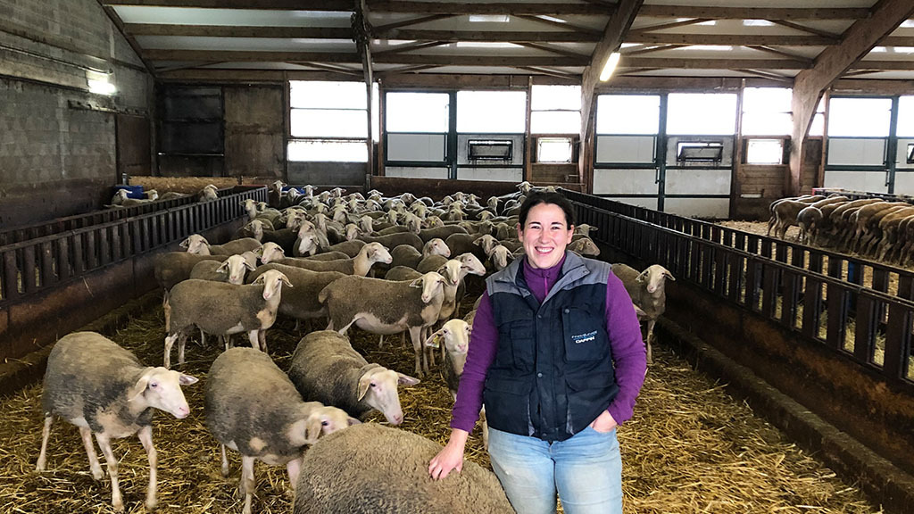 Marine Augais runs a 520-strong flock of Lacaune sheep, the milk is sold to produce Roquefort cheese