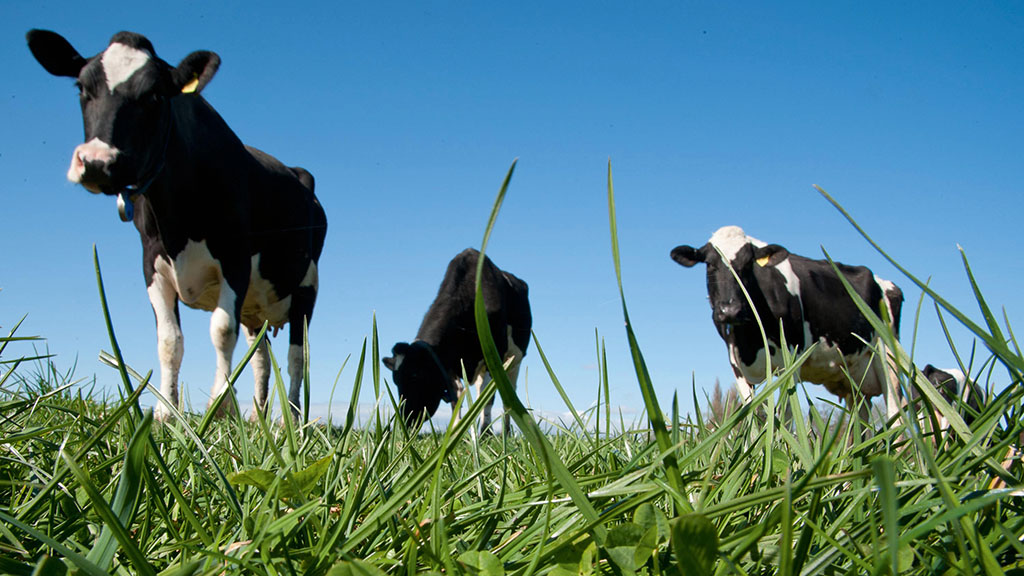 DAIRY-TECH 2020 PREVIEW: Revolutionary research drives industry's future