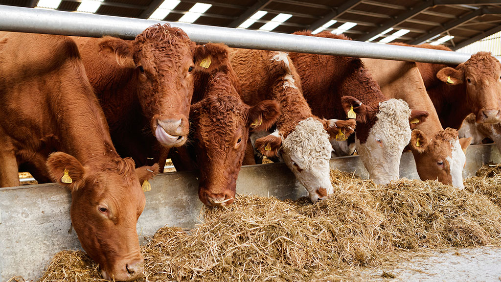 Uncertainty still overshadows beef market but consumption remains steady