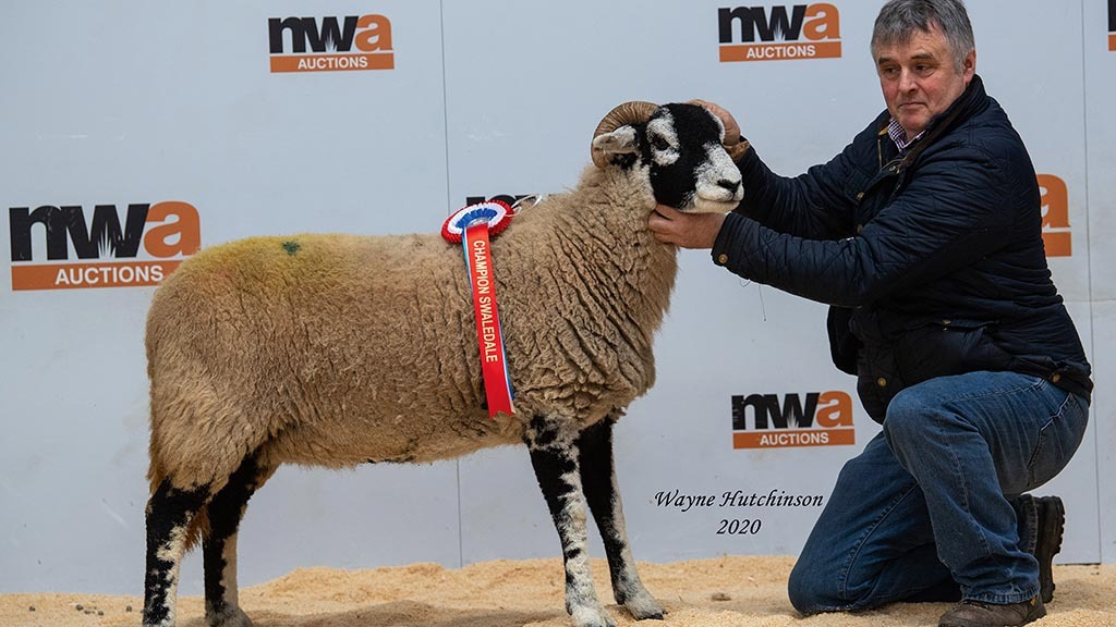 Overall champion from P.E. and K.A. Sowerby,  Kirkby Stephen, which sold for 2,000gns.
