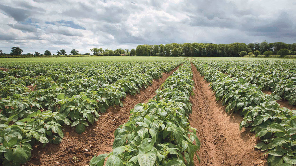Precision farming focus for Elveden Estate