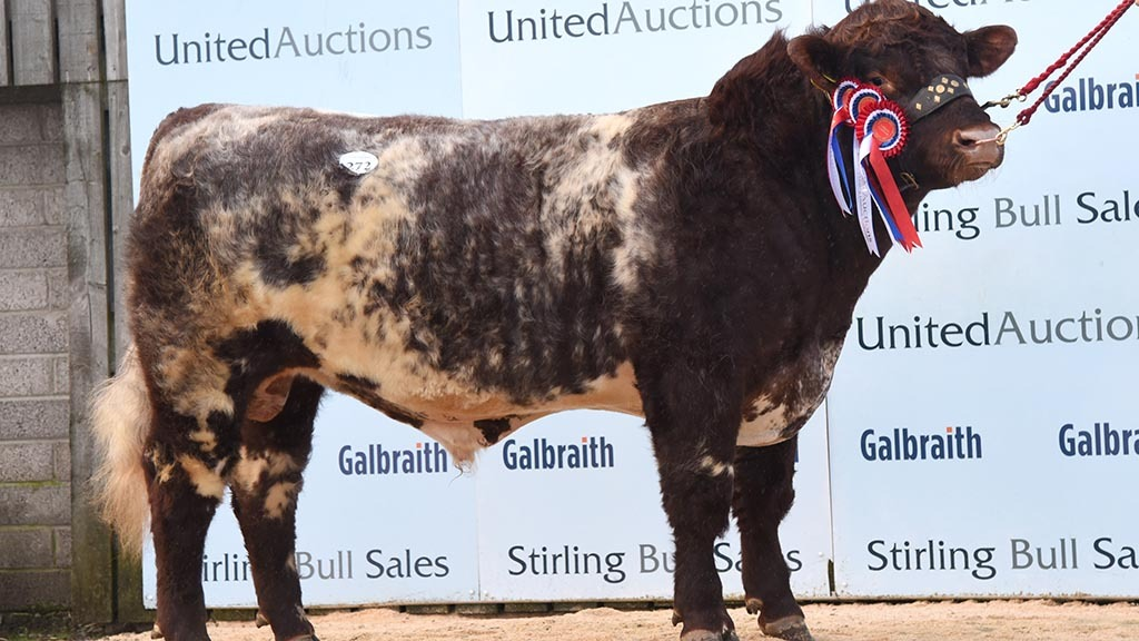 STIRLING BULL SALES: Beef Shorthorns sell to 20,000gns twice