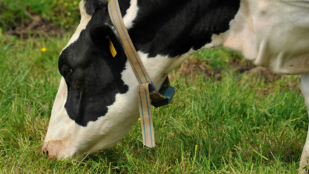 DAIRY TECH 2020: Use sensor technology to diagnose disease