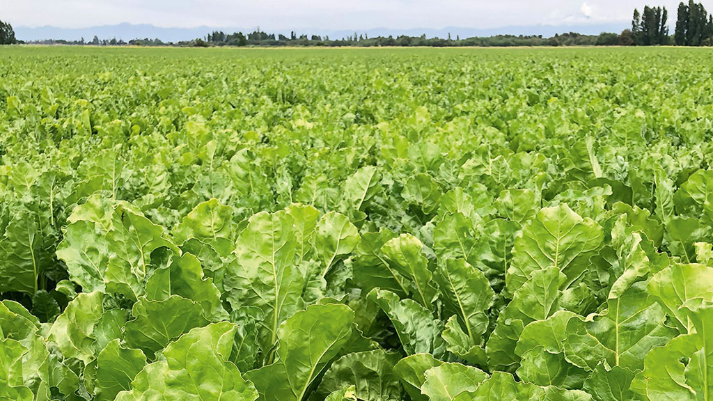 Discovering genetic drought tolerance in sugar beet