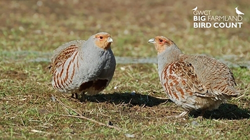Farmers called to support 2020 Big Farmland Bird Count