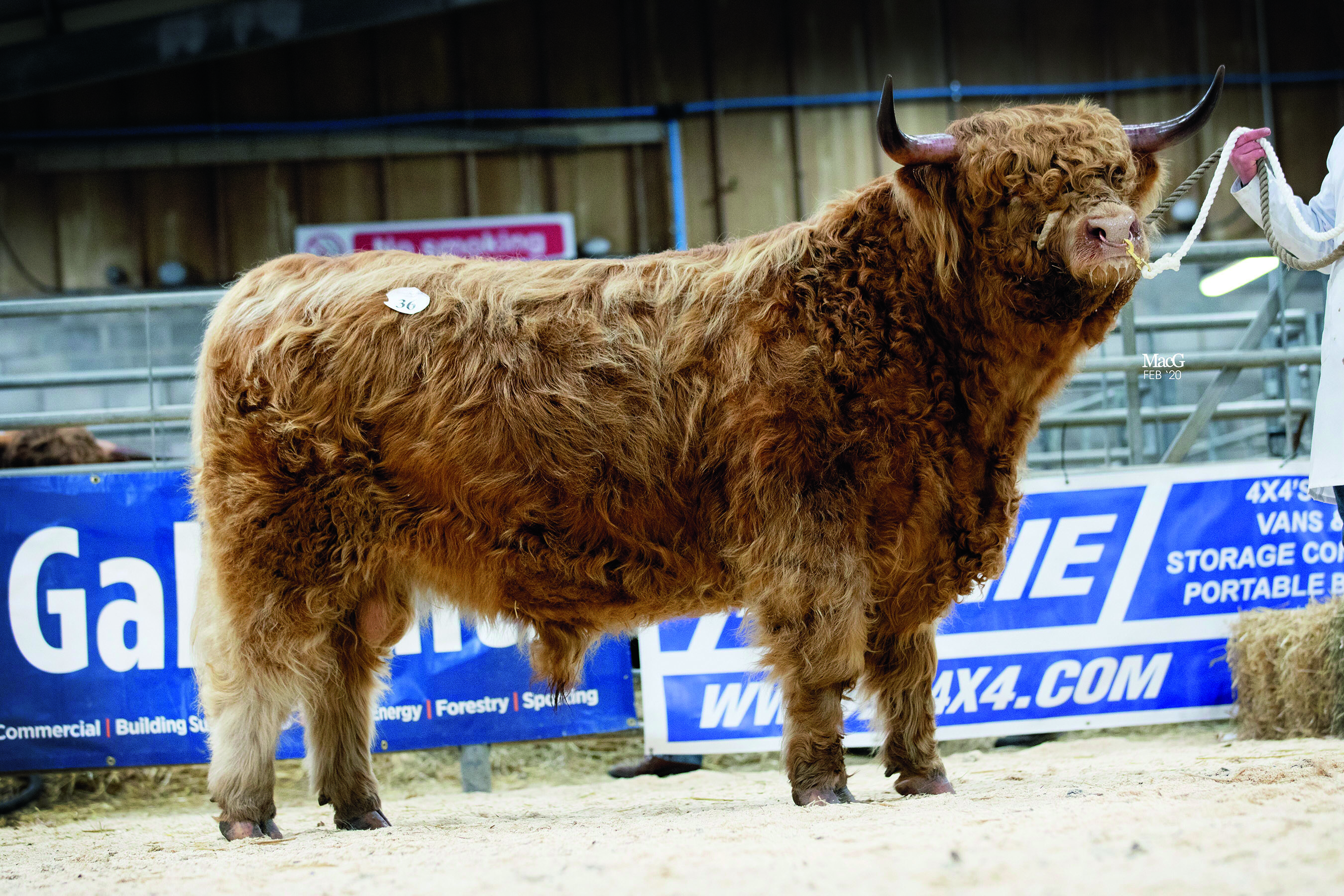 Highlands peak at 6,800gns at Oban