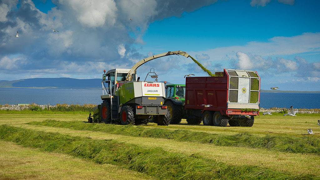 Best practice needed for multi-cut silage