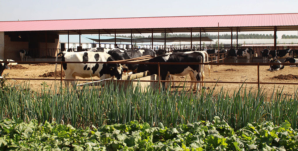Global Ag View: Chinese dairy demand threatened by Covid-19