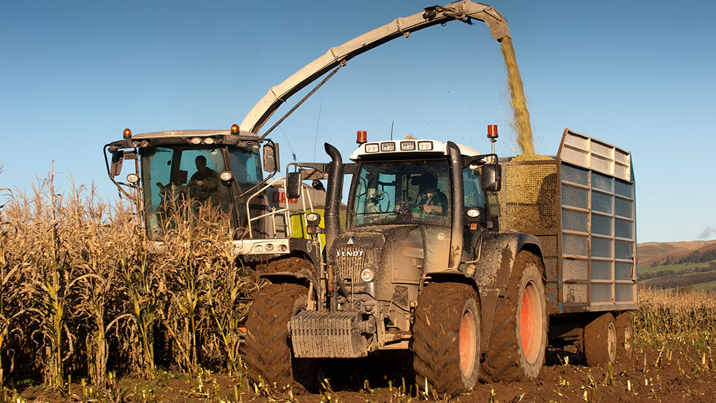 DAIRY SPECIAL: Challenging year for maize growers