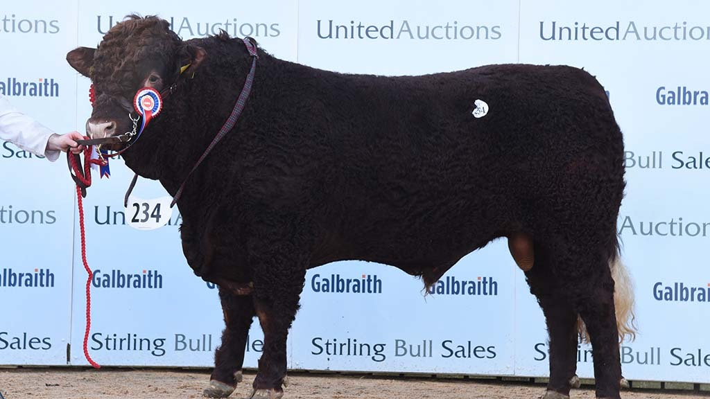 STIRLING BULL SALES: Salers realise 8,000gns