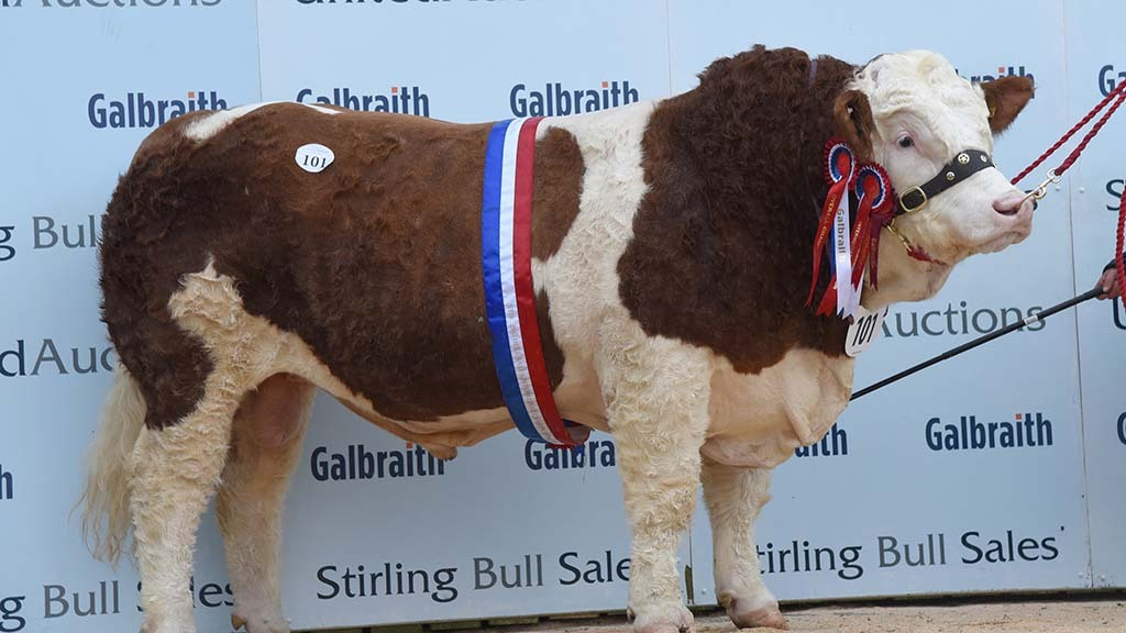 STIRLING BULL SALES: Wolfstar herd leads Simmentals at 18,000gns